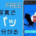 魚図鑑無料~魚釣り 写真 調べる 判別 シーバス~